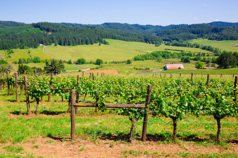 Oregon Vineyard Country